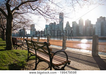 Park bench with cherry blossom at Roosevelt island next to east river and Manhattan in blurred background before sunset