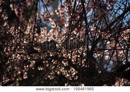Tiny pink flowers and black branches in the dark