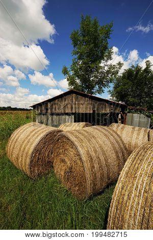 Big straw bales under blue sky in summer