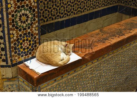 Ginger cat lying on a box in the Fes, Morocco