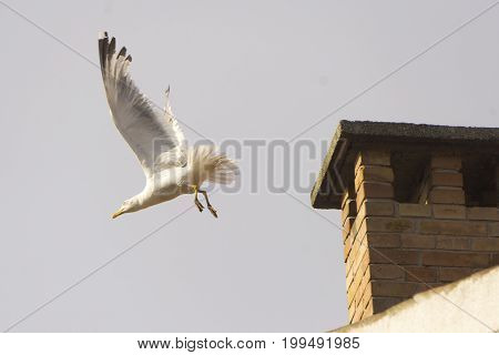 The seagull is starting with his flight