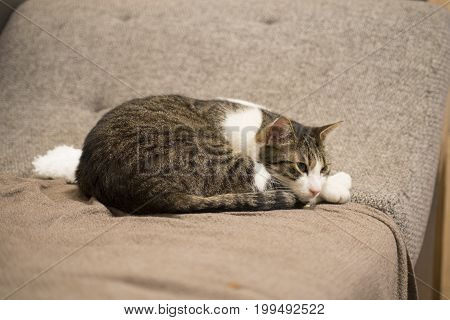 cat is chilling and relaxing on the couch