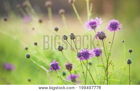 Purple wild flowers in the Sun . .