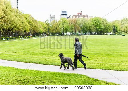 Quebec City Canada - May 30 2017: Man walking dog on Anneau de Rollerblades in Terrain des sports plaines d'Abraham by Grande Allee in morning
