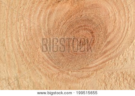 Cut A Piece Of Wood With A Twig Closeup