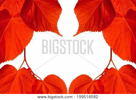 Frame of red autumn tilia leaves isolated on white background with copy space