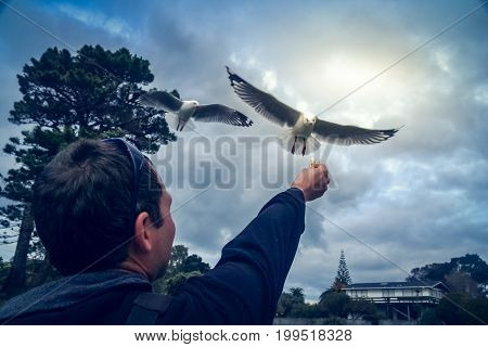 Man holding his hand up in the air trying to fed flying seagull