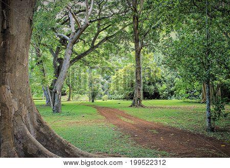 Photo Taken From A Botanical Garden In Kauai, Hawaii.