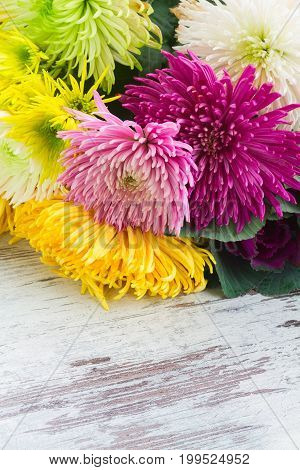 Chrisantemum fresh fall flowers bouquet on wooden aged table