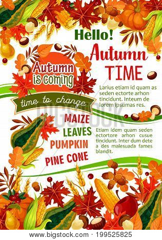 Hello Autumn banner of fall harvest celebration. Orange maple leaf, pumpkin and corn vegetable, apple fruit, forest mushroom, yellow foliage, acorn and cranberry for Thanksgiving Day poster design