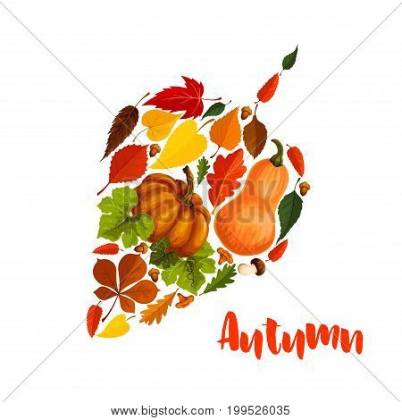 Autumn leaf symbol or poster of pumpkin harvest and fall foliage of maple, birch or chestnut and elm tree. Vector design of oak acorn, rowan berry and amanita or porcini cep and chanterelle mushrooms
