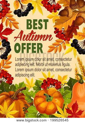 Autumn discount offer poster for farm market or seasonal shopping. Vector pumpkin or rowan berry harvest, wheat or rye grain on autumn falling leaves of maple leaf, birch or chestnut or polar tree