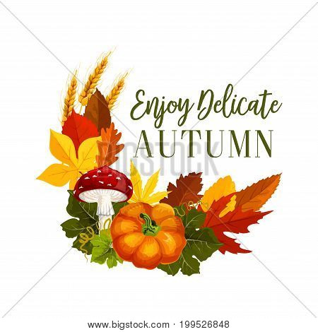 Autumn seasonal greeting card of poster of maple and birch leaf, wheat or rye and pumpkin harvest, fall amanita mushroom and oak acorn. Vector isolated design for Enjoy Delicate Autumn quote