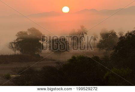 Jungle sunrise palm trees is a scenic landscape of the the morning jungle sunrise with the sun just peeking over the mountain top.