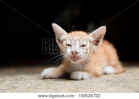 A Orange stray kitten (homeless cat) is hungry and lying on the warm floors with dark tone background. (selective focus with shallow depth of field)