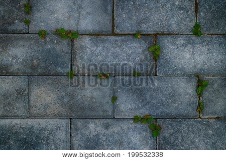 Background of gray stone blocks with green grass and moss.