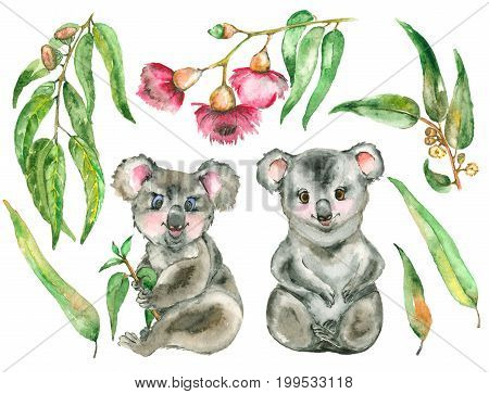 Watercolor Koala set. Two koala bear and the eucalyptus branches, leafs.