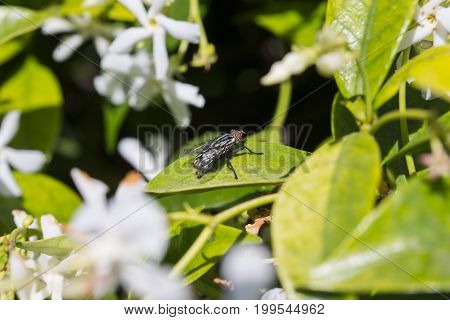 Fly resting on a plant leaf in a yard