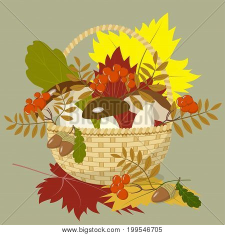 Wicker basket with mushrooms, colorful autumn maple and oak leaves, branches and berries of mountain ash and acorns, vector illustration