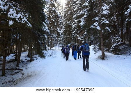 Group of people hiking on wintery snowy path with trees in Stubai Alps mountains Austria