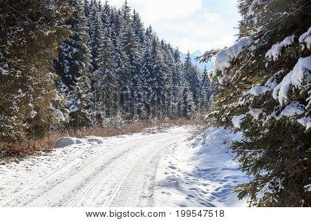 Wintery snowy path with trees in Stubai Alps mountains Austria