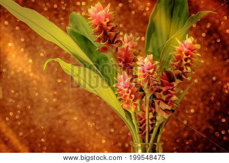 Pink Flower Of Pink Siam Tulip Or Curcuma Sessilis Flower In Vase With Light Pink Bokeh Background.