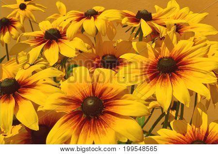 Field of orange flowers on orange background