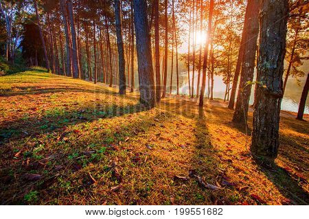 sun rising in pine wood of pang ung maehongsorn northern of thailand
