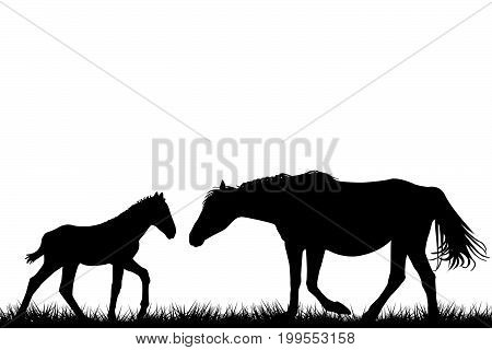 Silhouettes of mare and her foal on white background