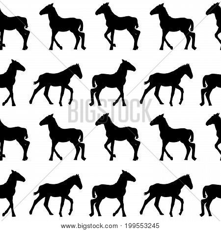 Seamless background with foals silhouettes on white background