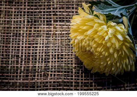 Macro Image And Vintage Style Of Beautiful Fresh Yellow Chrysanthemum On Wood Weave. Copy Space Text