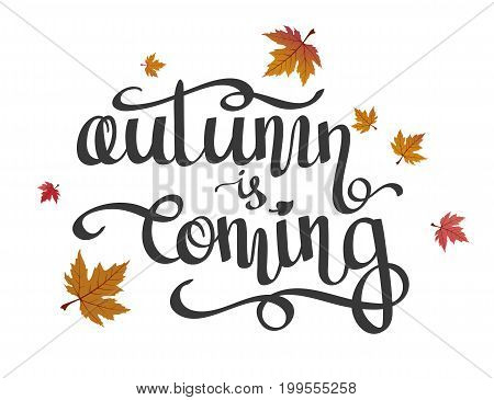 Hand-written lettering calligraphic phrase Autumn is Coming and flying maple leaves. Vector illustration isolated on white background. Design for greeting card poster banner.