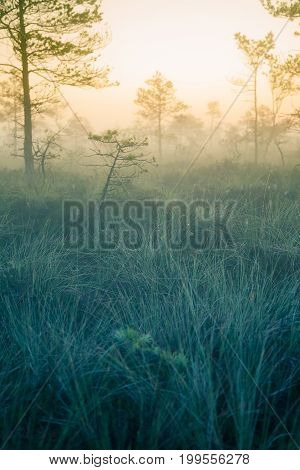 A dreamy swamp landscape before the sunrise. Colorful misty look. Marsh scenery in dawn. Beautiful artistic style photo.