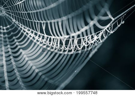 A beautiful closeup of a spider web in marsh. Web with water droplets in morning light. Beautiful marsh scenery. Abstract monochrome look.