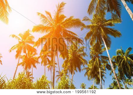 High palm trees against a blue sky.