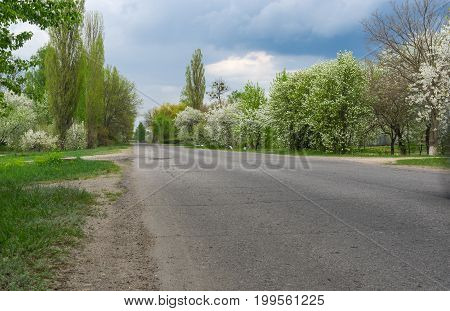 Spring landscape with asphalt road and flowering fruit trees on the roadside through Okhtyrka - small city in Sumskaya oblast Ukraine.