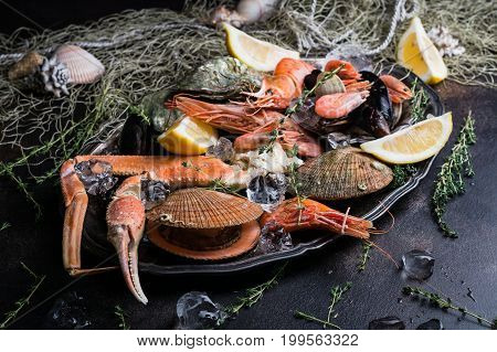 Seafood chilled on a plate with ice and lemon wedges on dark background. Closeup view selective focus