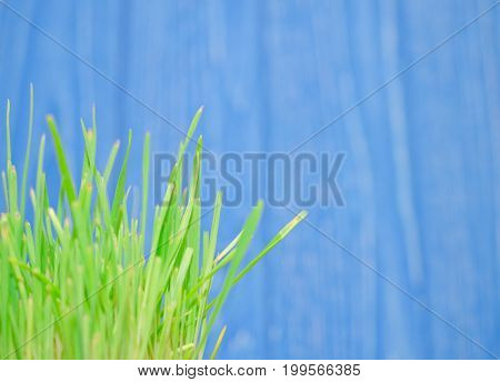 Macro shot of blurred green grass against the bright blue background at the end of summer very shallow DOF (with copyspace on the right)