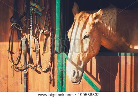 Horse In Contemporary Stable