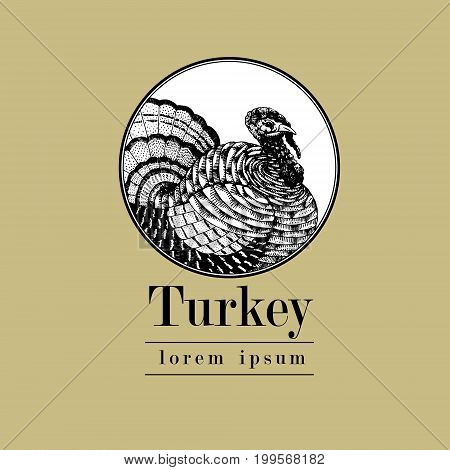 Vector hand drawn turkey illustration. Retro engraving style. Sketch farm animal drawing. Isolated fowls image on a white background. Logo template.