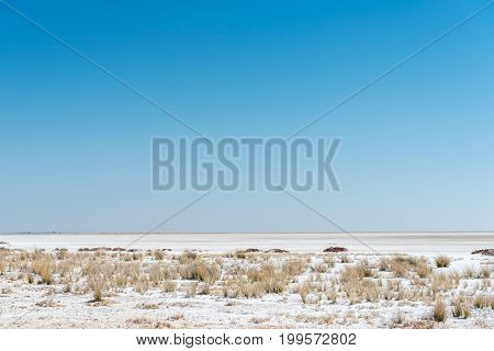 The Etosha pan is a large endorheic salt pan in Northern Namibia covering approximately 4800 square kilometer