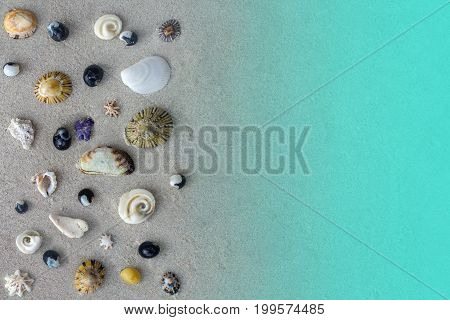 Many different seashells of Tasman sea on sand background or texture, sea and beach concept