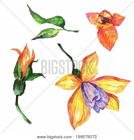 Wildflower orchid flower in a watercolor style isolated. Full name of the plant: orchid. Aquarelle wild flower for background, texture, wrapper pattern, frame or border.