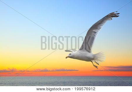 Sunset seascape with flying seagull. Copyspace composition