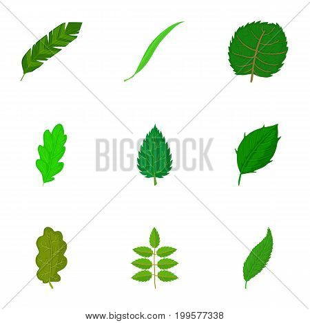 Torn green leaf icons set. Cartoon set of 9 torn green leaf vector icons for web isolated on white background