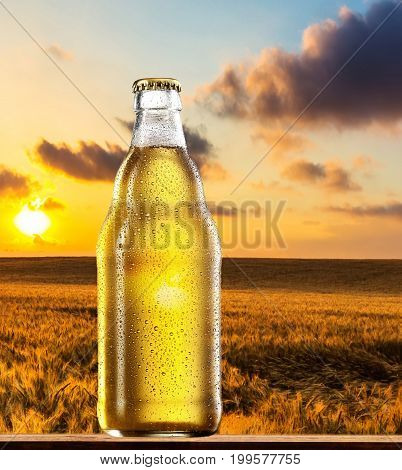 beer bottle on the background of a wheat field.