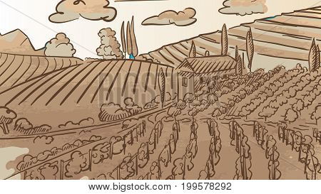 Vintage Vineyard Landcape Drawing