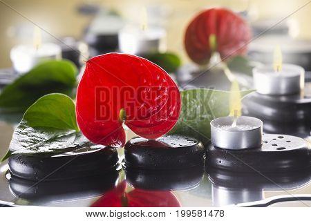 Red calla macro lies on black pebbles. Candles burning. Spa