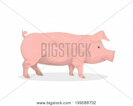 Isolated pig illustration on white background. Farm animal.