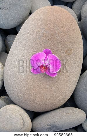 Single of pink orchid and stones texture